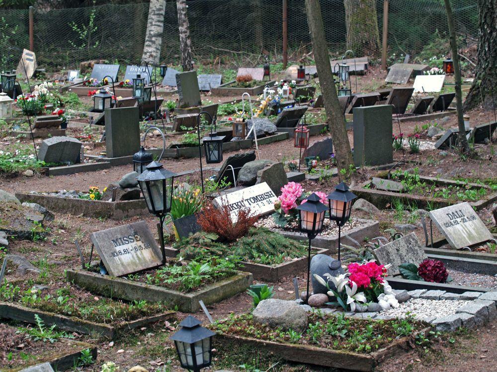 Den Bolonka Zwetna auf dem Tierfriedhof begraben.