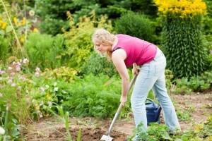 Meinen Bolonka Zwetna im eigenen Garten vergraben. Worauf muss ich achten?