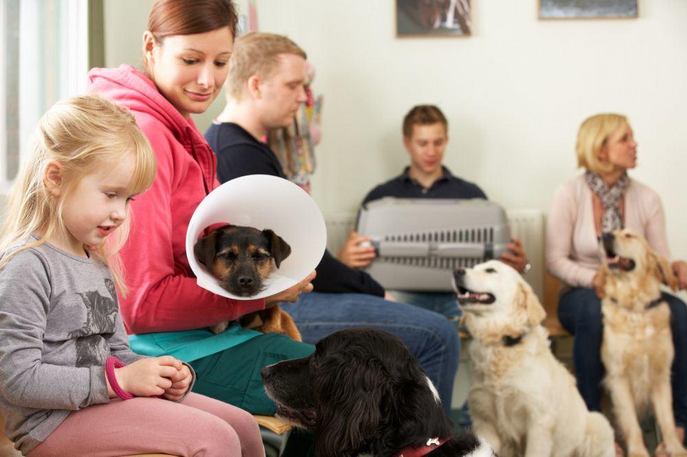 Wann muss ich mit dem Bolonka Zwetna zum Tierarzt?;
