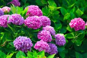 Achten Sie auf giftige Pflanzen im Garten!