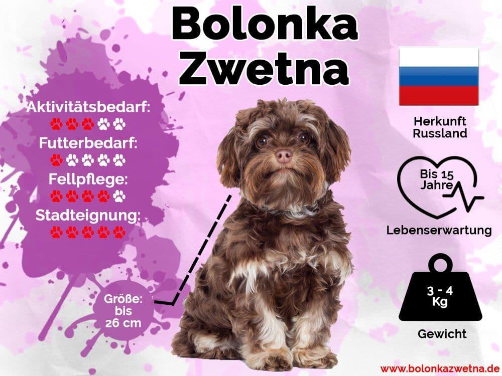Bolonka Zwetna Infografik